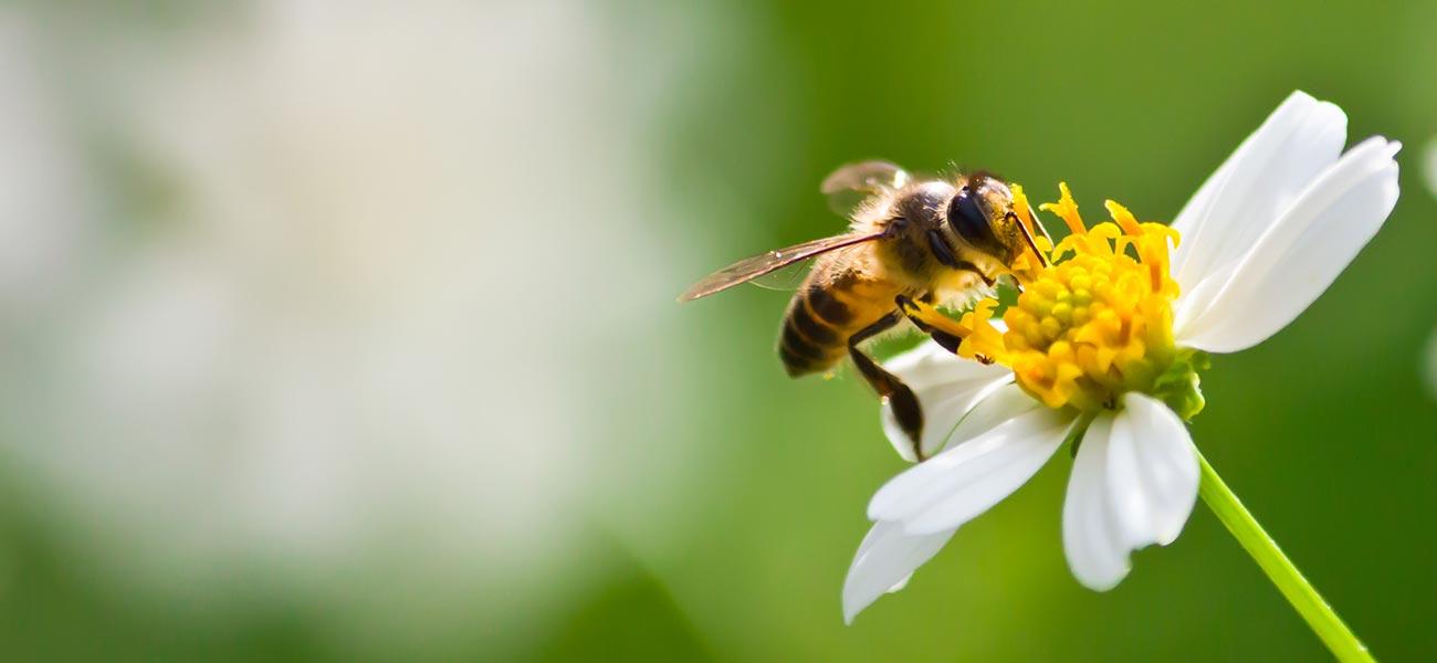 ape-fiore